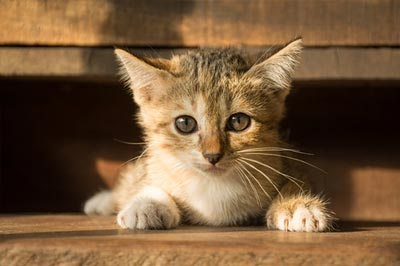 The cute cat in morning