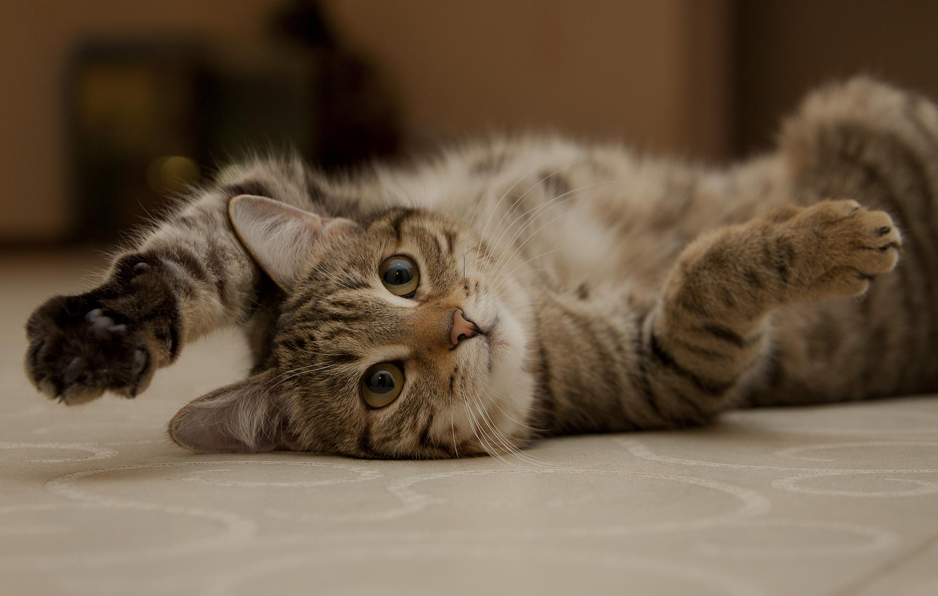 Cat playing on floor